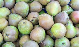 Pears of an old pear species. Fresh green pears of an old pear species royalty free stock photography