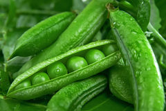 Fresh green peas. Fresh juicy green peas in the pod Stock Image