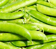 Fresh green peas. In the pod Stock Photography