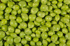 Fresh green peas background Stock Image