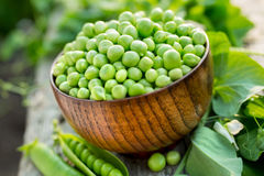 Fresh green peas in a bowl on old table Royalty Free Stock Images