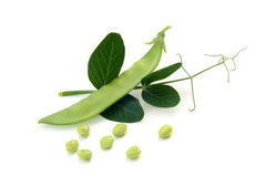 Fresh green peas  with leaves Royalty Free Stock Image