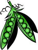 Fresh green peas. With ripe on white background Royalty Free Stock Photo