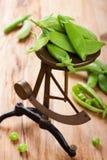 Fresh green peas on vintage scales Stock Photo