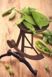 Fresh green peas on vintage scales Royalty Free Stock Image