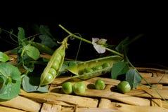 Fresh green peas on a wicker basket Royalty Free Stock Photo