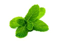 Fresh and green peppermint, spearmint leaves isolated on the white background. close up mint.  stock photo