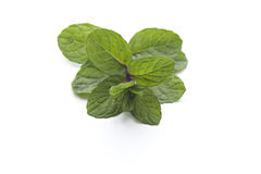 Fresh Green Peppermint Royalty Free Stock Photos