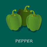 Fresh green peppers. Vector illustration of fresh green peppers Stock Image