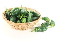 Fresh green Pimientos in a bowl Stock Photography