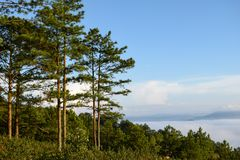Fresh green pine forest and moon on blue sky background at the morning part 4 stock images
