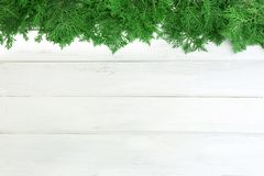 Fresh green pine leaves , Oriental Arborvitae, Thuja orientalis also known as Platycladus orientalis decoration on white wooden Stock Photography