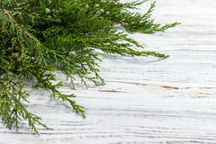 Fresh green pine leaves , Oriental Arborvitae, Thuja orientalis also known as Platycladus orientalis decoration on white wooden bo Royalty Free Stock Photos