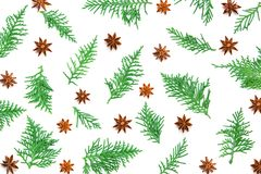 Fresh green pine leaves , Thuja orientalisbackground for Christ. Fresh green pine leaves with anise star herb , Oriental Arborvitae, Thuja orientalis background Royalty Free Stock Photography