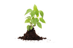 Fresh green plant for better environment Stock Photo