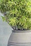 Decoration plant Royalty Free Stock Image