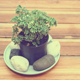 Fresh green plant for decorated Stock Photography