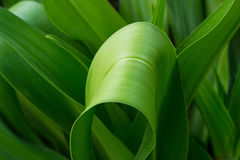 Fresh green plant leaf tropical in nature background Stock Photos