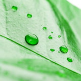 Fresh green plant leaf with water drops close up Royalty Free Stock Image