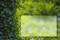 Fresh green plant leaves of Fern and Ivy. Europe forest. With space for entering text royalty free stock images