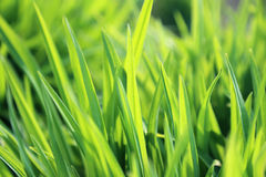 Fresh green plant Royalty Free Stock Images