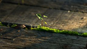 Fresh green plant outdoors. On wooden deck Royalty Free Stock Image