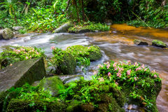 Fresh green plant and pink flower on rock in middle Mun Dang Wat Royalty Free Stock Photos