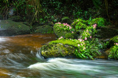 Fresh green plant and pink flower on rock in middle Mun Dang Wat Royalty Free Stock Photo