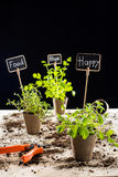 Fresh green plants and cards Stock Photo