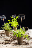 Fresh green plants and cards Royalty Free Stock Photo