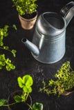 Fresh green plants Stock Image