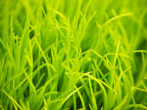 Fresh Green Plants Stock Images