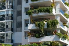 Free Fresh Green Plants Growing On White Tall Building Royalty Free Stock Image - 152088256