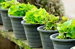 Fresh green plants in pots Stock Photos