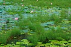 Fresh green pond Stock Photos