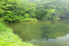 Fresh green of pond Stock Photography