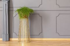 Fresh green potted plant placed on metal gold stand in grey room royalty free stock photo