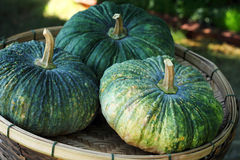 Fresh green pumpkin. In the market Stock Photography