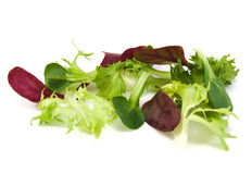 Fresh green and purple lettuce, corn salad leaves Stock Photography