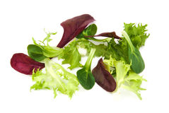 Fresh green and purple lettuce, corn salad leaves Stock Photo