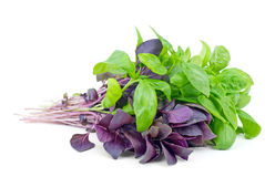 Fresh green and purple sweet basil Royalty Free Stock Images