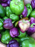 Fresh green and purple sweet peppers Stock Photography