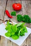 Fresh Green Purslane Royalty Free Stock Photo