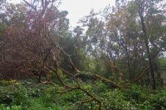 Green rainforest at mon jong doi, Chaing mai, Thailand. Fresh green rainforest at mon jong doi, Chaing mai, Thailand stock images