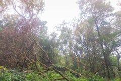 Green rainforest at mon jong doi, Chaing mai, Thailand. Fresh green rainforest at mon jong doi, Chaing mai, Thailand royalty free stock photo