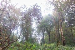 Green rainforest at mon jong doi, Chaing mai, Thailand. Fresh green rainforest at mon jong doi, Chaing mai, Thailand royalty free stock photography
