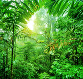 Fresh green rainforest Royalty Free Stock Images