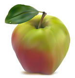 Fresh green-red  apple. With green leaf vector Stock Photography