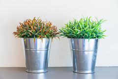 Fresh green and red grass. In small metal buckets Stock Photo