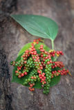 Fresh green and red peppercorns with leaf Royalty Free Stock Photo